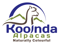 Kooinda Alpacas - Naturally Colourful