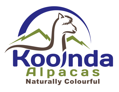 Kooinda Alpacas - Naturally Colourful